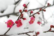 Апрельский снег значительно снизит урожай плодовых деревьев