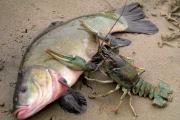 На Житомирщине массово гибнут рыба и раки