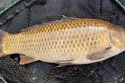 Коррупция убивает: рыба из зоны отчуждения