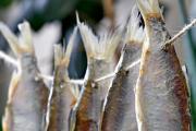 В Киеве введен запрет на продажу рыбы