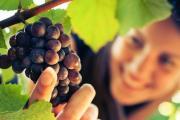 Отменили лицензии для украинских виноделов