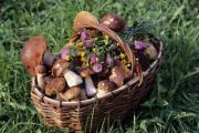 На рынках Киева могут появиться отравленные грибы
