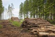 ЕС требует отменить запрет на экспорт леса
